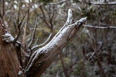 La nieve recogió en ramas de árbol en el puesto de observación de la pared de Lithgows Hassans Imagen de archivo