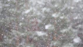 La nieve vuela Abstracción del fondo almacen de video