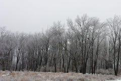 La nieve y el hielo cubrieron el bosque 1 Foto de archivo libre de regalías