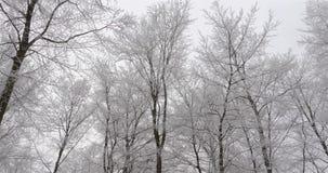 La nieve y el hielo de la toma panorámica cubrieron árboles en bosque del invierno almacen de video