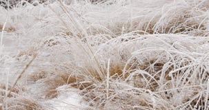 La nieve y el hielo de la toma panorámica cubrieron la vegetación y el agua almacen de video