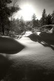 La nieve y los árboles en invierno ajardinan en Círculo Polar Ártico Fotos de archivo