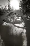 La nieve y los árboles en invierno ajardinan en Círculo Polar Ártico Imagen de archivo libre de regalías