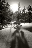 La nieve y los árboles en invierno ajardinan en Círculo Polar Ártico Fotografía de archivo libre de regalías