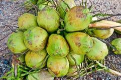 La noce di cocco Immagine Stock