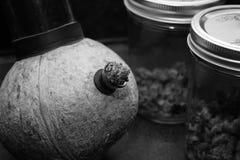 La noce di cocco Bong Fotografia Stock