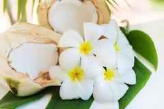 La noce di cocco fresca taglia con le foglie di palma ed i fiori tropicali del frangipane Immagini Stock
