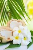 La noce di cocco fresca taglia con le foglie di palma ed i fiori tropicali del frangipane Immagine Stock Libera da Diritti