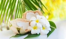 La noce di cocco fresca taglia con le foglie di palma ed i fiori tropicali del frangipane Fotografia Stock Libera da Diritti