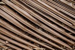 La noce di cocco lascia la struttura Immagini Stock