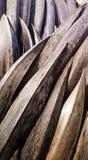 La noce di cocco tropicale indigena unica lascia il marrone secco Fotografia Stock