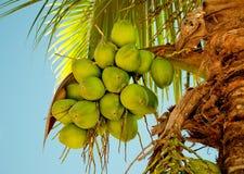 La noce di cocco verde Fotografie Stock Libere da Diritti