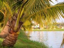 La noce di cocco vicino alla laguna Immagine Stock