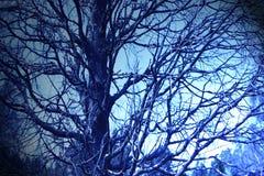 La noche bajo rama Imágenes de archivo libres de regalías