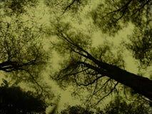 la noche corre silencioso fotos de archivo