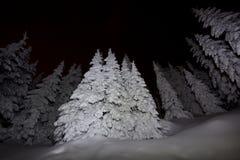 La noche se enciende en árboles nevados profundos de un bosque Fotos de archivo libres de regalías