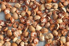 La noix de bétel a coupé en fond Photographie stock