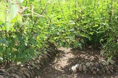 La noix de coco dépouille très bon pour la fertilisation de sol Photos stock