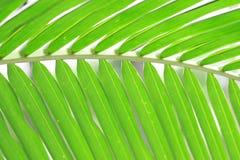 La noix de coco part du fond Photographie stock libre de droits