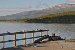 La Norvège du nord 50 Photos libres de droits