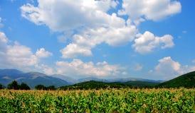 La nostra bella natura in Bulgaria Fotografie Stock Libere da Diritti