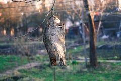 La nourriture a séché des poissons accrochant sur une branche d'arbre Photographie stock libre de droits