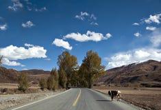 La nouvelle et belle route dans la montagne. photographie stock