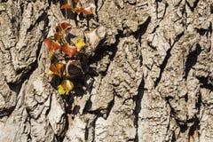 La nouvelle vie avec les vieux arbres Images stock
