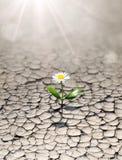 La nouvelle vie dans la terre aride image stock
