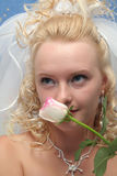 La novia y el color de rosa se levantaron imagenes de archivo