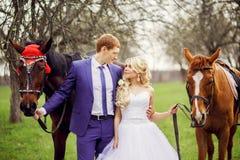 La novia y el novio de la boda caminan con los caballos en el jardín de la primavera Imagen de archivo