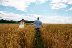 La novia y el novio están caminando en el campo de trigo Visión desde la parte posterior imágenes de archivo libres de regalías
