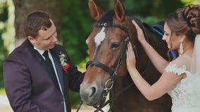 La novia y el novio que presentan al lado del caballo Alegre frotan ligeramente el caballo feliz junto Día de boda almacen de metraje de vídeo
