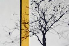 La nuance d'un arbre Photo stock
