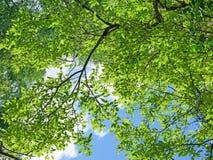 La nuance d'un arbre Photographie stock