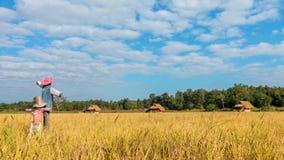 La nube del lapso de tiempo que se mueve sobre el arroz amarillo coloca metrajes