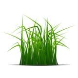 Bandera de la hierba Fotografía de archivo libre de regalías