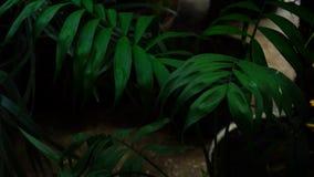 La nueva clase de palmera creció en las islas tropicales n foto de archivo
