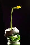 La nueva planta que crece en machacado puede Fotografía de archivo libre de regalías