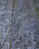 La nuit de l'hiver bleu Image libre de droits