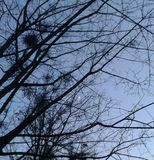 La nuit lune Photographie stock libre de droits