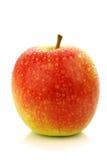 La nuova cultivar fresca della mela ha chiamato la signora dentellare Fotografie Stock Libere da Diritti