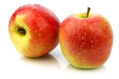 La nuova cultivar fresca della mela ha chiamato la signora dentellare Fotografia Stock Libera da Diritti