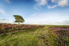 La nuova foresta fotografia stock libera da diritti