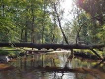 La nuova foresta Fotografie Stock Libere da Diritti