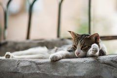 la nuova foto 2018, gatto smarrito divertente sta dormendo con il fronte stanco fotografie stock libere da diritti