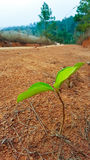 La nuova pianta Fotografia Stock Libera da Diritti
