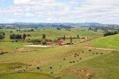 La Nuova Zelanda Fotografie Stock Libere da Diritti