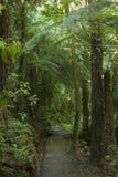 La Nuova Zelanda cespuglio Fotografia Stock