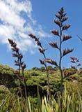 La Nuova Zelanda, fiori alla baia di opito Immagine Stock